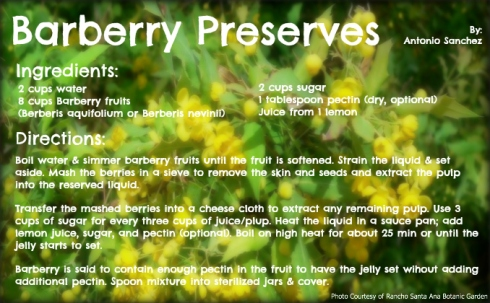 Barberry Preserves 2