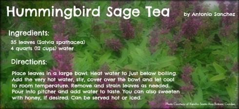 Hummingbird sage tea