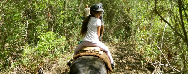 Horseback 8
