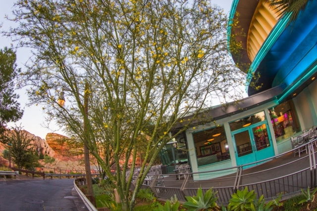 Green Palos Verde near Radiator Springs Racers. Photo courtesy The Disneyland Resort.