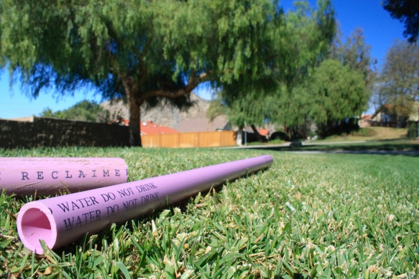 Purple Pipe on Grass Horizontal